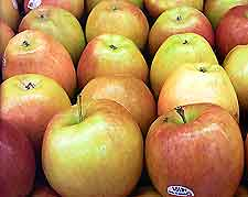 how to make apple wine from apples